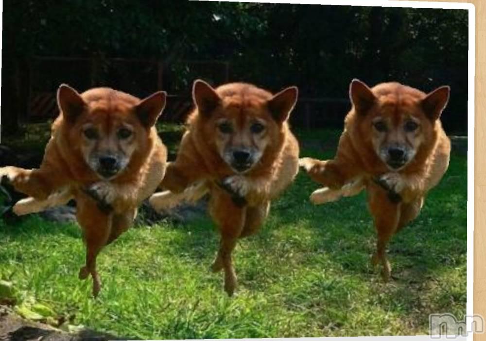 新潟デリヘル至れり尽くせり(イタレリツクセリ) しの(32)の2月18日写メブログ「犬は踊りだした」