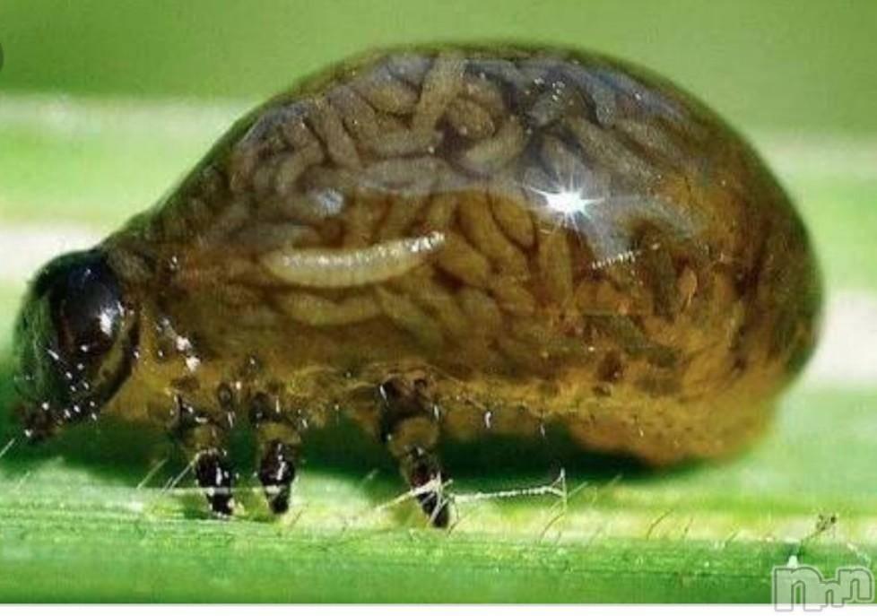 新潟デリヘル至れり尽くせり(イタレリツクセリ) しの(32)の12月15日写メブログ「なんだかんだ虫が最強説」