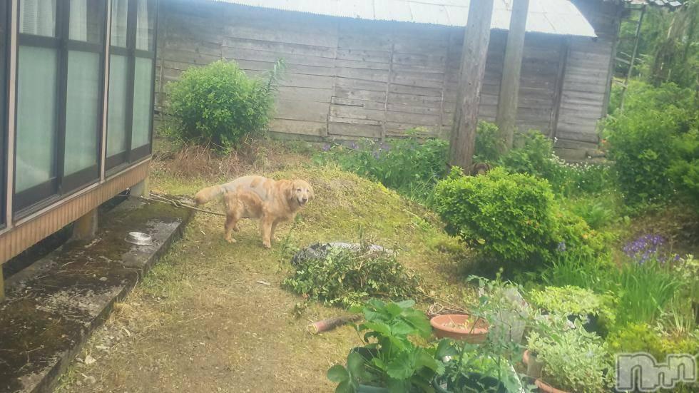 新潟デリヘル至れり尽くせり(イタレリツクセリ) しの(32)の6月1日写メブログ「この中に犬が2匹います」