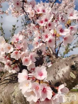 新潟デリヘル Office Amour(オフィスアムール) ちひろ(27)の4月9日写メブログ「ちひろ作」