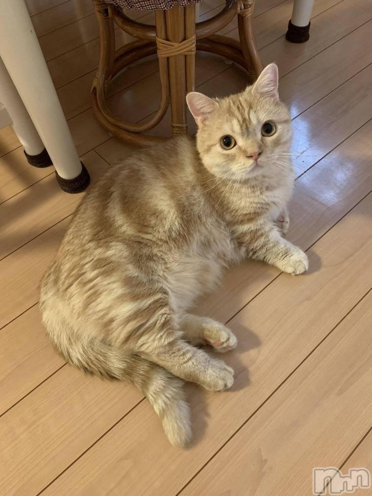 新潟デリヘルOffice Amour(オフィスアムール) 美雪(29)の11月1日写メブログ「にゃんふけphoto」