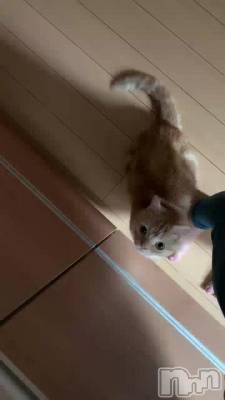 新潟デリヘル Office Amour(オフィスアムール) 美雪(29)の7月7日動画「おはようにゃんすけ♡♡」
