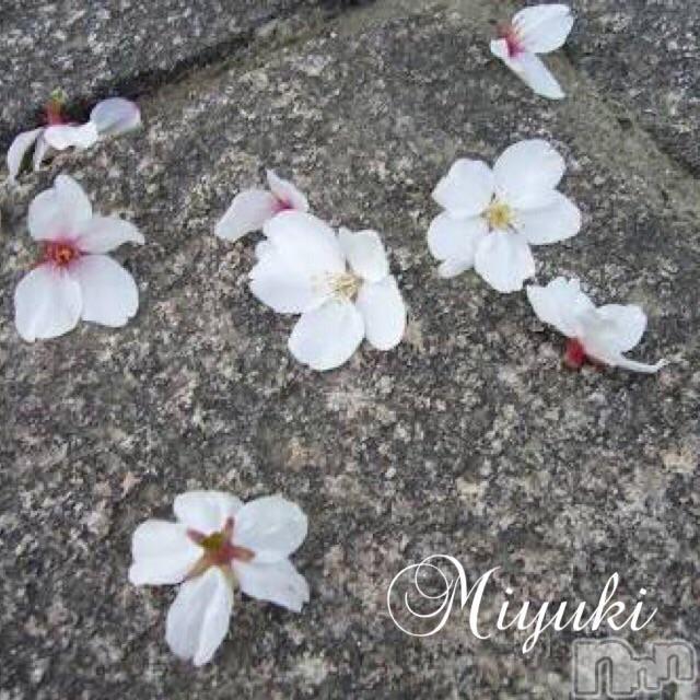 新潟デリヘルOffice Amour(オフィスアムール) 美雪(29)の2018年4月17日写メブログ「*いつかは散る、その時まで*」