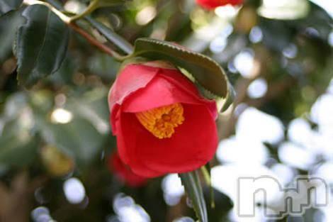 三条デリヘル人妻じゅんちゃん(ヒトヅマジュンチャン) 高山すず(30)の3月20日写メブログ「春が来ました」