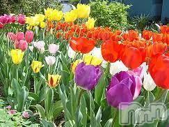 三条デリヘル人妻じゅんちゃん(ヒトヅマジュンチャン) 高山すず(30)の3月25日写メブログ「大きめなお花が大好きです」