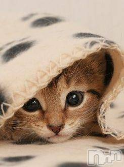 新潟駅前メンズエステoneness(ワンネス) 五十嵐 ちかの7月13日写メブログ「猫好きにはたまらない」