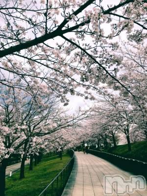 古町ガールズバーカフェ&バー KOKAGE(カフェアンドバーコカゲ) みのり(24)の4月12日写メブログ「桜咲いてた!!」