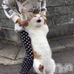 柏崎デリヘル デリヘル柏崎(デリヘルカシワザキ)の4月25日お店速報「猫脱走中~(=^・・^=)」