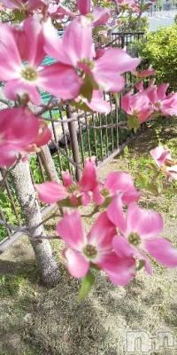 上田人妻デリヘル 人妻華道 上田店(ヒトヅマハナミチウエダテン) 【熟女】春美(42)の5月9日写メブログ「おはようございます」