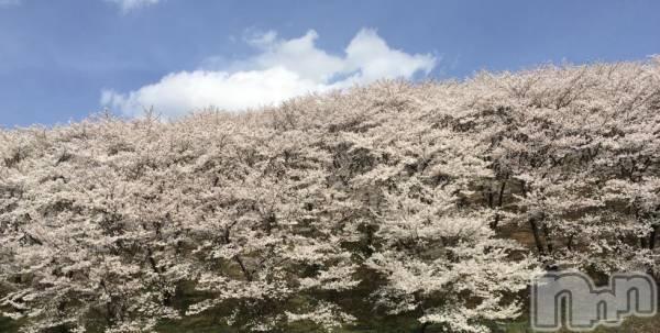 松本デリヘルPrecede(プリシード) つゆき(50)の4月5日写メブログ「『お山の桜さま』」