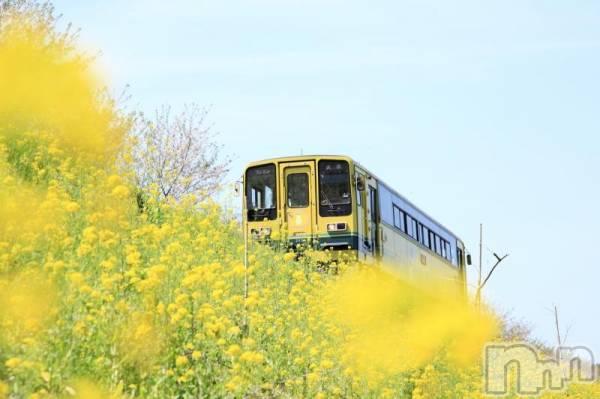 松本デリヘルPrecede(プリシード) つゆき(50)の4月19日写メブログ「『大好きな季節』」