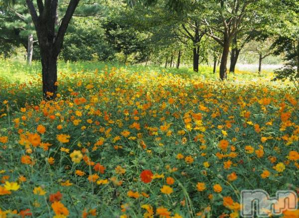 松本デリヘルPrecede(プリシード) つゆき(50)の5月16日写メブログ「『幸せなこと』」
