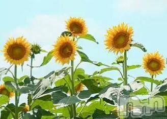 松本デリヘルPrecede(プリシード) ゆいか(48)の2017年6月19日写メブログ「お疲れ様です☆」