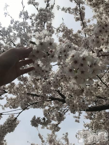 殿町リラクゼーションoneness(ワンネス) の2019年4月17日写メブログ「きれい」