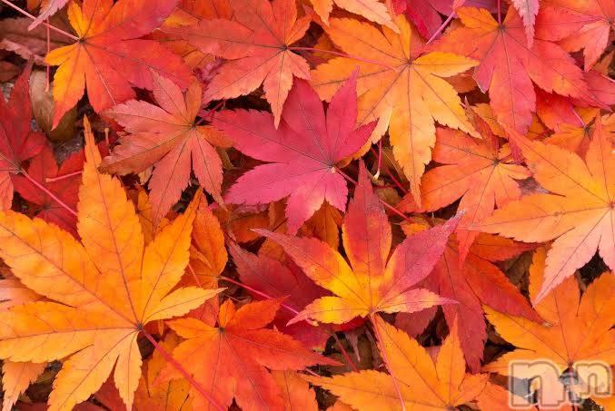 新潟メンズエステ癒々(ユユ) ななせ(26)の11月8日写メブログ「秋になってた」