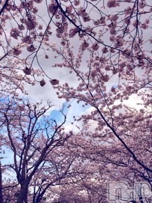 古町ガールズバーカフェ&バー KOKAGE(カフェアンドバーコカゲ) ちひろの4月12日写メブログ「ぶろっさむさむ」