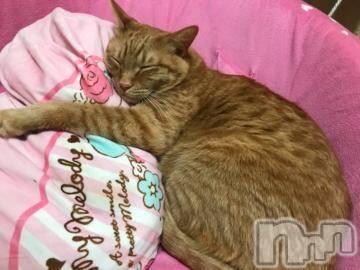 松本デリヘルPrecede(プリシード) つぐみ(35)の2月22日写メブログ「猫の日♪」