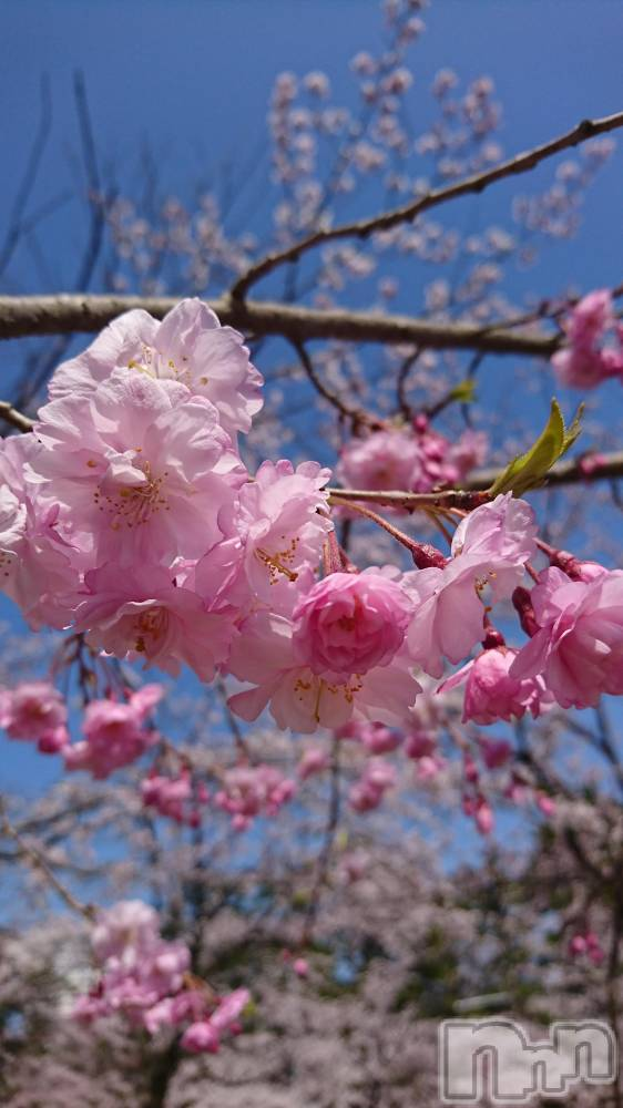 新潟ソープ新潟ソープランド(ニイガタソープランド) 雪村さん(32)の4月8日写メブログ「ありがとう」
