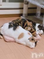 袋町キャバクラクラブ プラチナ 上田(クラブ プラチナ ウエダ) 星咲 幸(18)の9月26日写メブログ「生きてます」