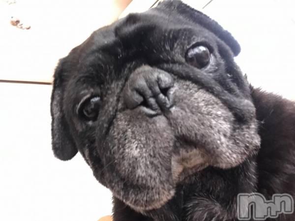 殿町キャバクラELECT(エレクト) ちかの3月14日写メブログ「お鍋犬」