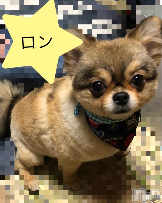 諏訪デリヘルミルクシェイク ユノ(21)の2019年3月15日写メブログ「愛犬!」
