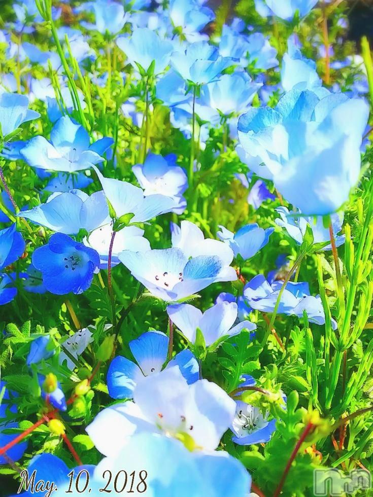 松本デリヘルPrecede(プリシード) さや(28)の6月15日写メブログ「私のアイドル♪笑」