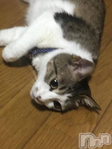 新潟駅前キャバクラDiletto(ディレット) の2018年7月12日写メブログ「ぐてー。」