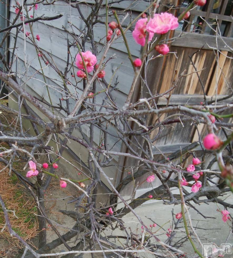 新潟デリヘルオンリーONE(オンリーワン) ひとみ★完全素人(45)の2月26日写メブログ「春の気配感じます」