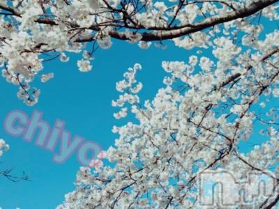 長岡人妻デリヘル人妻楼 長岡店(ヒトヅマロウ ナガオカテン) ちよ(27)の4月12日写メブログ「桜舞い散る中に忘れた記憶と...♪*゚」