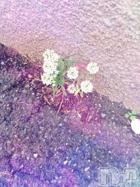 上越デリヘルHarlem(ハーレム) ゆう(18)の2018年5月17日写メブログ「おはな」