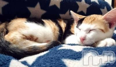 長野ガールズバーCAFE & BAR ハピネス(カフェ アンド バー ハピネス) しおりの2月22日写メブログ「猫中毒」