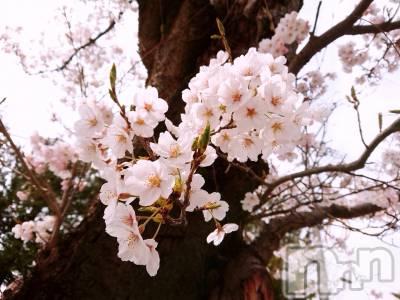 長野ガールズバーCAFE & BAR ハピネス(カフェ アンド バー ハピネス) さわ(19)の4月12日写メブログ「あの子がいるって!」
