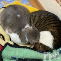 高田クラブ・ラウンジ Ragdoll (ラグドール) まゆの12月29日写メブログ「ぬくもり!」