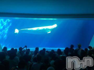 新潟デリヘルCharmant(シャルマン) るな/新人(24)の8月14日写メブログ「白イルカ」
