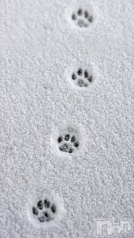 新潟駅前ガールズバーガールズバーFall(ガールズバーフォール) まりあの1月18日写メブログ「凍死」