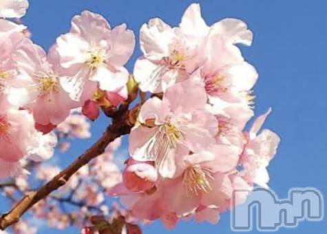 飯田デリヘルFive 飯田店(ファイブイイダテン) みく(26)の4月11日写メブログ「晴天花日和」