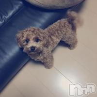 高田キャバクラ Dream(ドリーム) yukiの10月12日写メブログ「チビな愛犬☆」