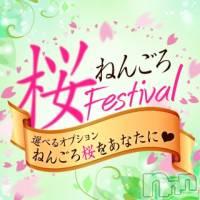 長岡人妻デリヘル ねんごろや(ネンゴロヤ)の4月26日お店速報「ねんごろお急ぎTIME◎ねんごろ桜Festival」