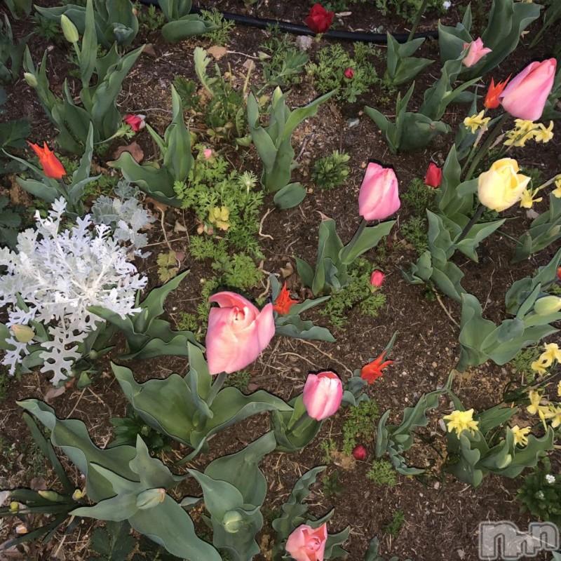 新潟デリヘル綺麗な手コキ屋サン(キレイナテコキヤサン) あすか(18)の2018年4月17日写メブログ「つらい…」