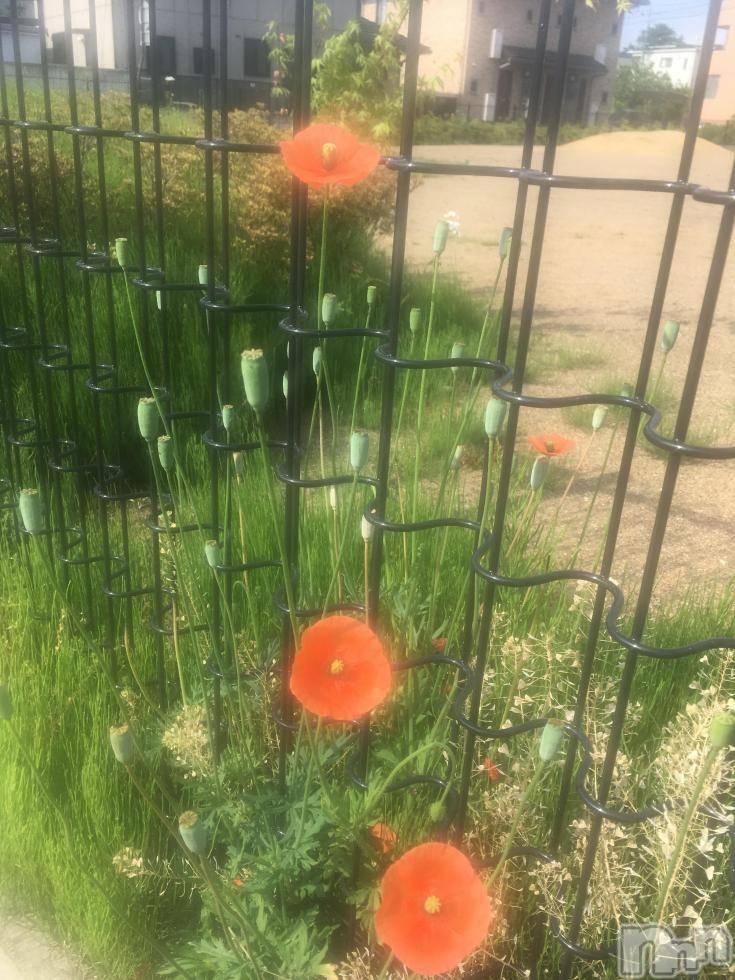 上田デリヘルENDLESS 上田店(エンドレス ウエダテン) さくら(28)の5月22日写メブログ「花の名はしらねど」