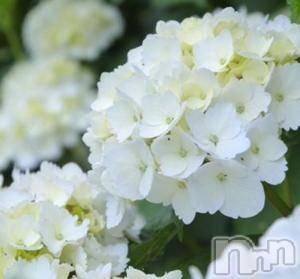 上田デリヘルENDLESS 上田店(エンドレス ウエダテン) さくら(28)の7月5日写メブログ「お帰りなさい」