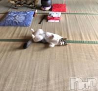 新潟駅南リラクゼーションアロマ&リラクゼーション 癒し空間Calme(アロマアンドリラクゼーション イヤシクウカン チャルム) 山川 ゆづき(21)の8月14日写メブログ「ごろごろ」