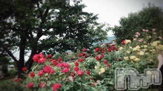 諏訪デリヘルミルクシェイク アコ(24)の2019年7月12日写メブログ「久しぶりの」