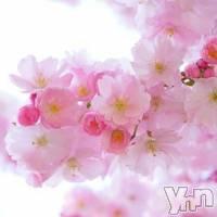 甲府ソープ 石亭(セキテイ)の4月21日お店速報「店舗メンテナンスで店休日とさせて頂きます。」