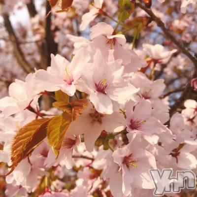 富士吉田キャバクラLounge Cinderella(ラウンジ シンデレラ) いろはの5月3日写メブログ「▽ろくでもない素晴らしい世界」