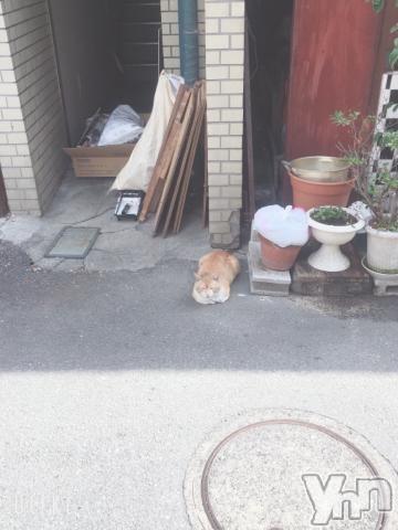 甲府ソープオレンジハウス こなた(21)の2019年6月14日写メブログ「やばい!見てー?!!」