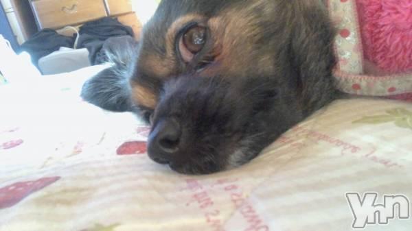 甲府スナック月香美人(ゲッカビジン) の2020年1月16日写メブログ「愛犬♡」