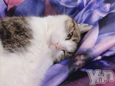 富士吉田キャバクラLounge Cinderella(ラウンジ シンデレラ) えれな(21)の6月10日写メブログ「我が家の愛猫Part 2」