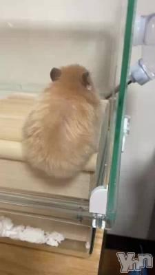 甲府ソープ Vegas(ベガス) しほ(20)の7月3日動画「しほのてんちゃんです」