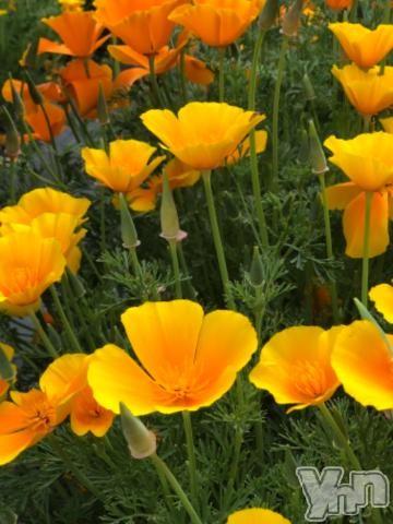甲府デリヘルLOVE CLOVER(ラブクローバー) つばき(29)の2019年5月15日写メブログ「ありがとうございます」